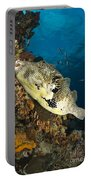Map Pufferfish, Indonesia Portable Battery Charger
