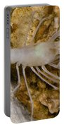Mclanes Cave Crayfish Portable Battery Charger