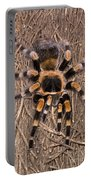 Mexican Red-legged Tarantula Portable Battery Charger