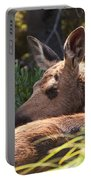 Moose Baby 5 Portable Battery Charger