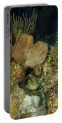 Moray Eel, Belize Portable Battery Charger