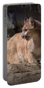 Mountain Lion On The Prowl Portable Battery Charger