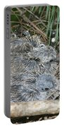 Mourning Dove Chicks Portable Battery Charger
