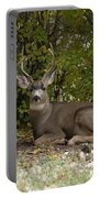 Mulie Buck 2 Portable Battery Charger