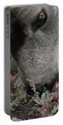 Mulie Buck 5 Portable Battery Charger