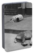 Napping Friends In Valparaiso Portable Battery Charger