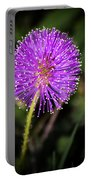 Natures Fireworks Portable Battery Charger