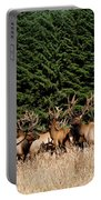 Northcoast Elk Along The 101 Portable Battery Charger