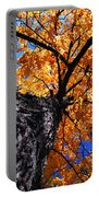 Old Elm Tree In The Fall Portable Battery Charger