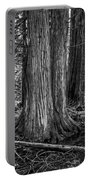 Old Growth Cedar Trees - Montana Portable Battery Charger