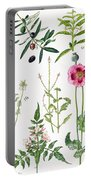 Opium Poppy And Other Plants  Portable Battery Charger by  Elizabeth Rice