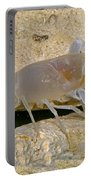 Orange Lake Cave Crayfish Portable Battery Charger