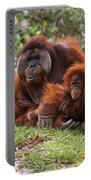 Orangutan Mother And Baby Portable Battery Charger