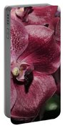 Orchid Vanda And Ascocenda Hybrid II Portable Battery Charger