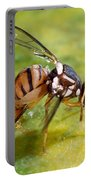Oriental Fruit Fly Laying Eggs Portable Battery Charger