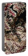 Ornate Ghost Pipefish, Fiji Portable Battery Charger