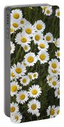 Ox-eyed Daisies, Banff National Park Portable Battery Charger