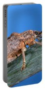 Oxyops Vitiosa Leaf Weevil On Melaleuca Portable Battery Charger