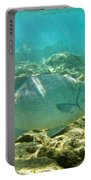 Pacific Chub 1080113.jpg Portable Battery Charger