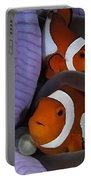 Pair Of Clown Anemonefish, Indonesia Portable Battery Charger