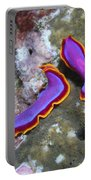 Pair Of Pink Flatworms, Kalimantan Portable Battery Charger