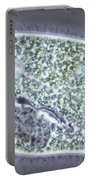 Paramecium Bursaria Portable Battery Charger by M. I. Walker