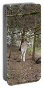 Piebald Portable Battery Charger