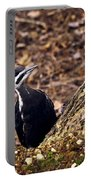 Pileated Woodpecker 3 Portable Battery Charger