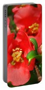 Plum Blossoms Portable Battery Charger