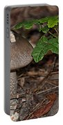 Point Lobos Park  Portable Battery Charger