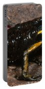 Poison Arrow Frog With Tadpoles Portable Battery Charger
