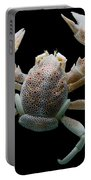 Porcelain Crab Portable Battery Charger