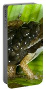 Pratts Rocket Frog With Young Portable Battery Charger