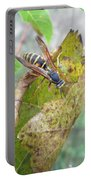 Predatory Wasp Hunts Spider Portable Battery Charger