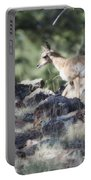 Pronghorn Antelope Fawn Portable Battery Charger