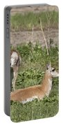 Pronghorn Antelope With Young Portable Battery Charger
