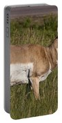 Pronghorn Male Custer State Park Black Hills South Dakota -1 Portable Battery Charger