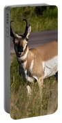 Pronghorn Male Custer State Park Black Hills South Dakota -2 Portable Battery Charger