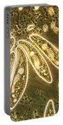 Protozoa, Paramecium, Lm Portable Battery Charger