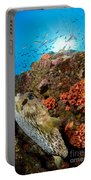 Pufferfish And Reef, La Paz Mexico Portable Battery Charger
