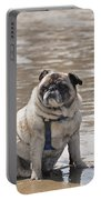 Pug Can't Be Budged Portable Battery Charger
