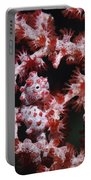 Pygmy Seahorse, Indonesia Portable Battery Charger