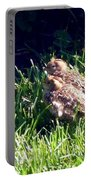 Quail Chicks Portable Battery Charger