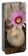 Rainbow Cactus Portable Battery Charger