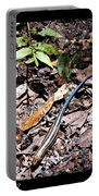 Rainbow Skink Portable Battery Charger