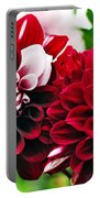 Red And White Variegated Dahlia Portable Battery Charger