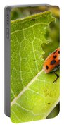 Red Beetle Munching Portable Battery Charger