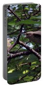 Red-eyed Vireo Feeding Cowbird Fledgling Portable Battery Charger