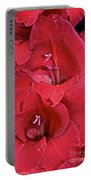 Red Gladiolus Portable Battery Charger by Susan Herber