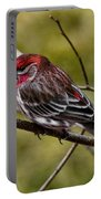 Red Head Black Tail Portable Battery Charger